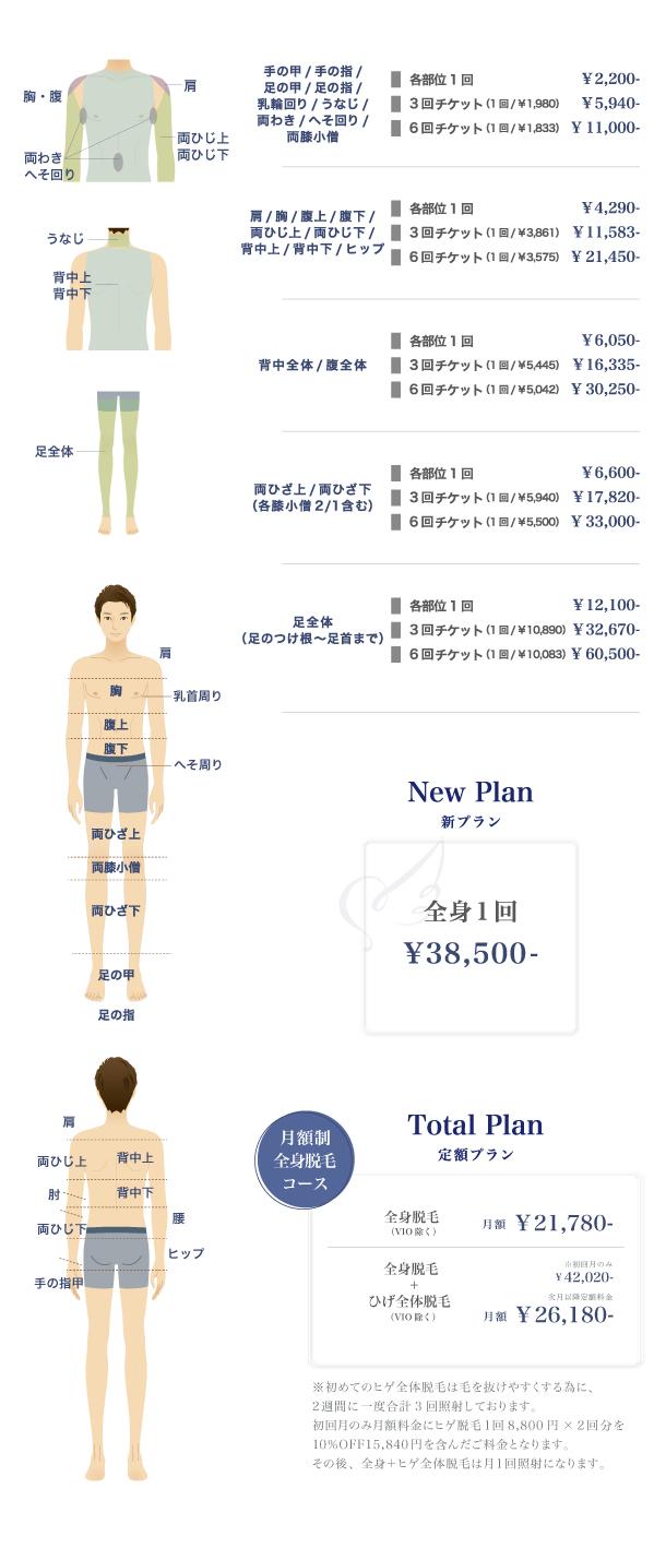 Body (体の部位)